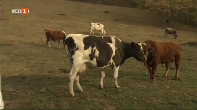 Семейна животновъдна ферма в Български извор