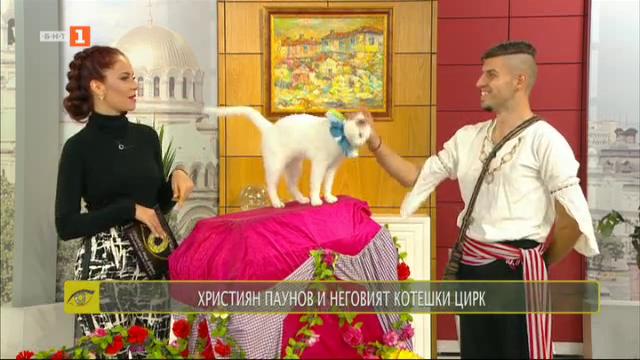 Християн Паунов и неговият котешки цирк