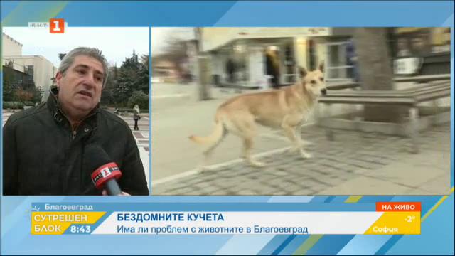 Бездомните кучета в Благоевград