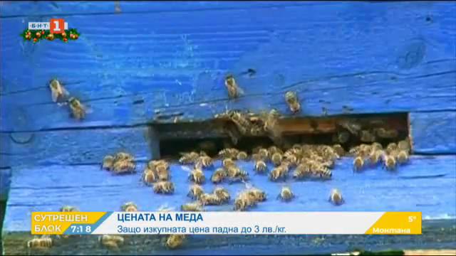 Проблемите на българските пчелари
