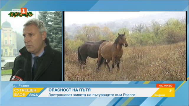 Безстопанствени коне и крави застрашават живота на пътуващите към Разлог