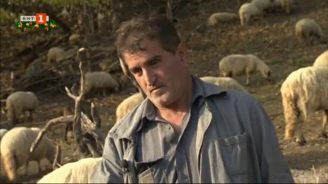 Красимир Удренов от Тетевенския балкан и неговата любов към животните