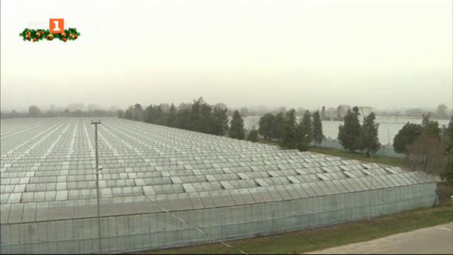 Промишлено производство на биозеленчуци в село Звъничево