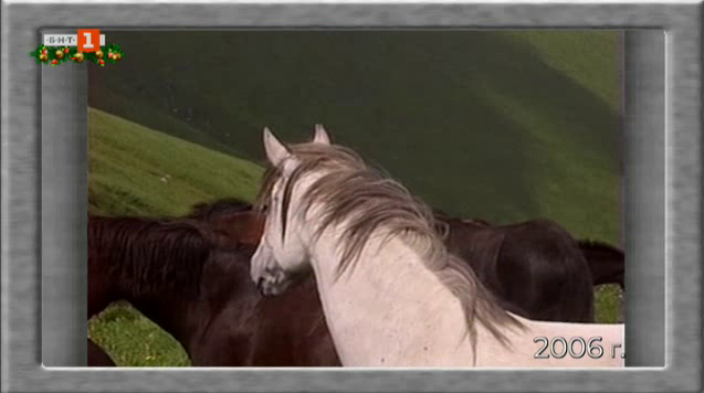 Как се отглежда дъбенска овца и каракачански коне на 2000 м надморска височина
