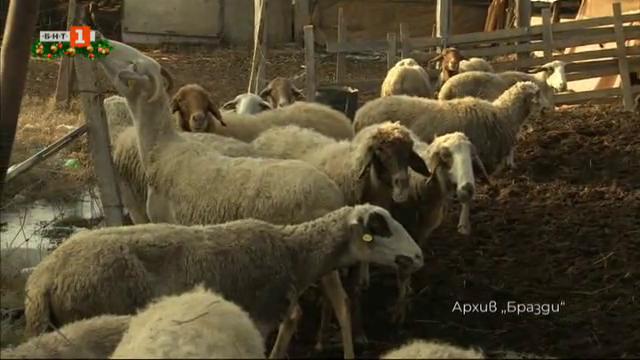 """""""Многодетната"""" ферма на сем. Петракови от с. Войсил"""