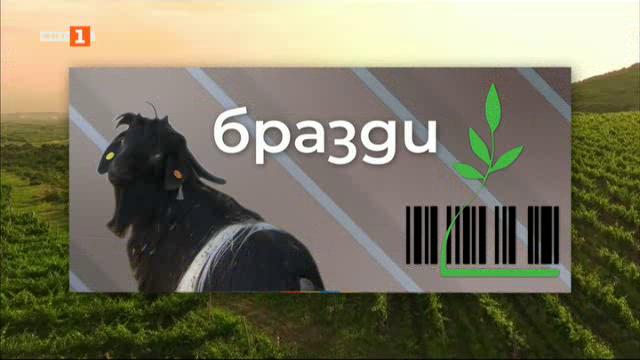 Защо продължават да изчезват малките ферми в Родопите
