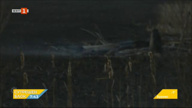 Пожарът в Драгоманското блато - какви са щетите и причините за огъня?
