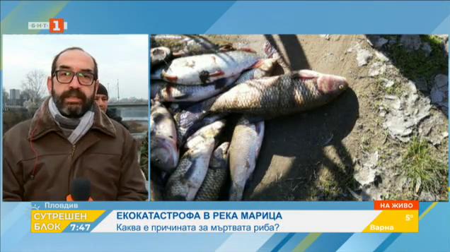 Каква е причината за мъртвата риба в Марица?