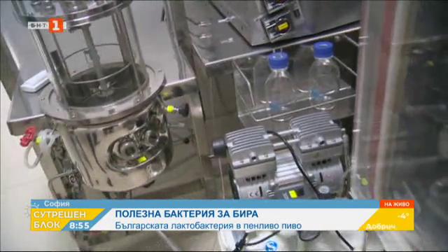 Българската бактерия лактобациликус и нейно изненадващо приложение