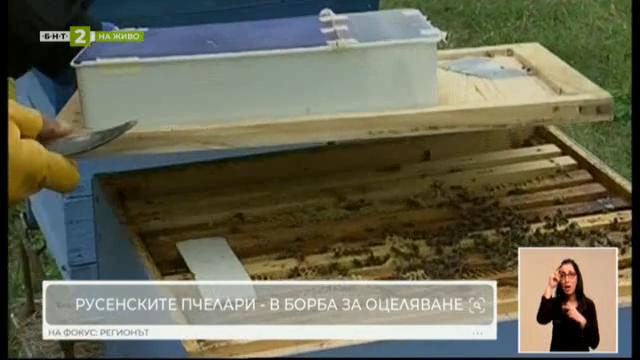Как оцеляват русенските пчелари при абсурдно ниски изкупни цени за меда