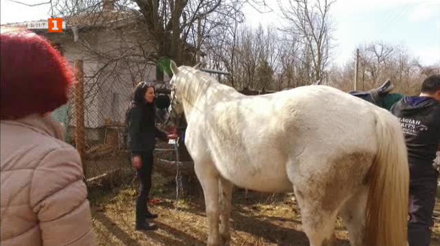 Евлогия и нейната страст към конете