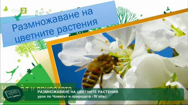 Човекът и природата 4. клас: Размножаване на растенията
