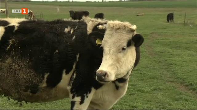 Доколко са рентабилни малките и средни млечни ферми у нас