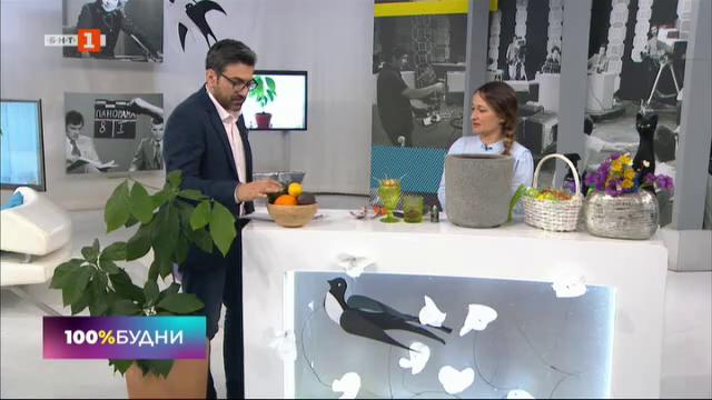 Супермаркет на балкона: Как да си засадим авокадовкъщи