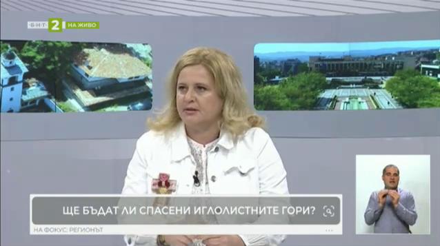 Как ще бъдат спасени боровите гори в Благоевград и Кюстендил?