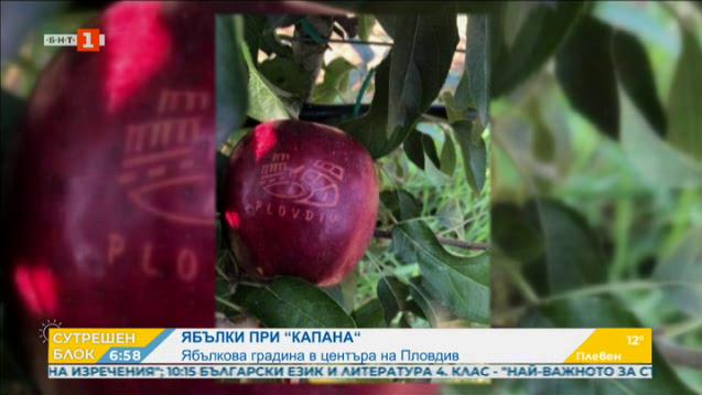 Ябълкова градина расте в центъра на Пловдив
