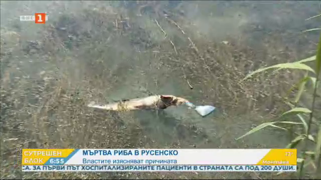 Мъртва риба в русенско