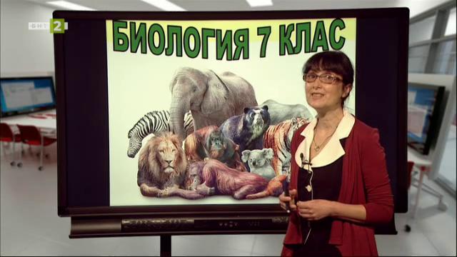 """Биология и здравно образование 7. клас: """"Клас бозайници"""""""