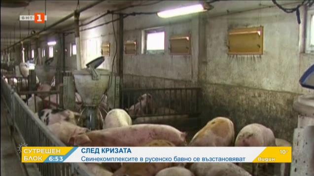 Свинекомплексите в Русенско, пострадали от африканската чума, се съвземат