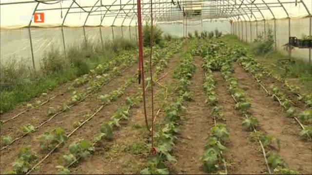 За био зеленчуци от Софийското поле