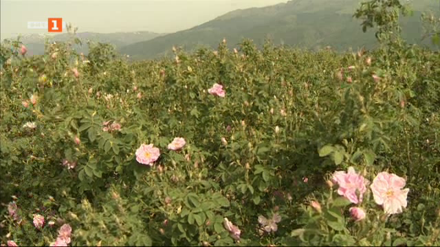 Как ще бъдат субсидирани розите и зеленчуците тази година