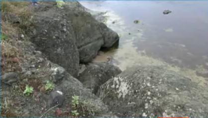 Дете загина от паднала скала край къмпинг Гардения