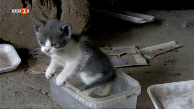 Димитър, който майстори инвалидни колички за котета и кучета