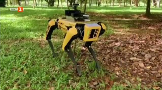 Куче робот върши овчарската работа