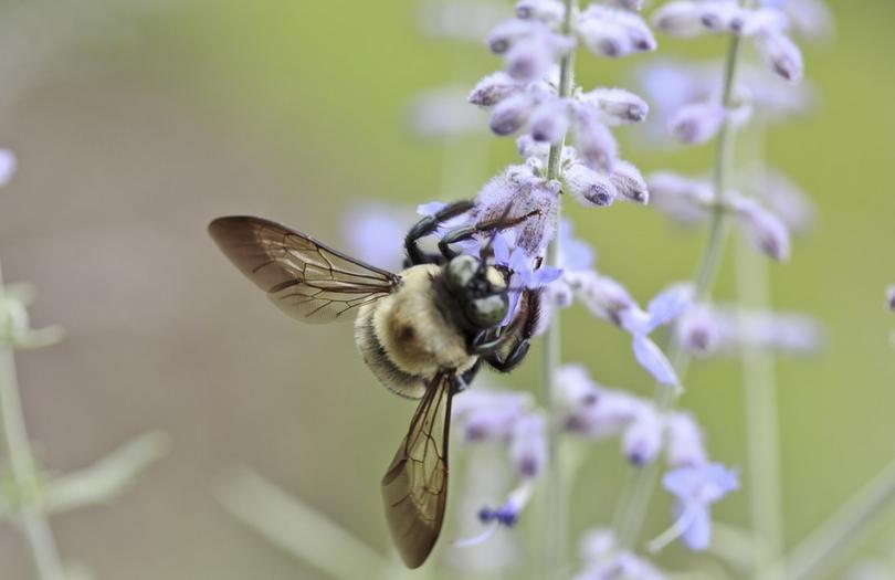 Доц. Стаевска: Грижата за алергично болните продължава и в условията на COVID