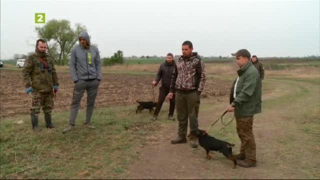 Полеви изпитания за кучета от породата немски ловен териер
