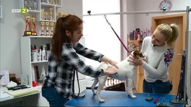 Дисплазията -  едно от разпространените ставни заболявания при кучетата