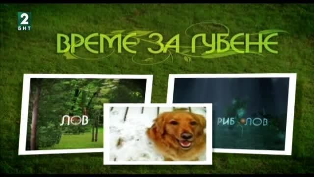 Пролетно изпитание на вродени качества за ловни кучета от породата курцхаар