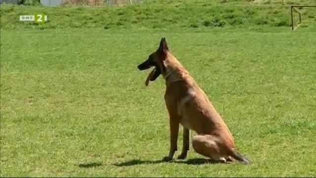 Традиционното състезание за спорт с кучета - купа Тракия