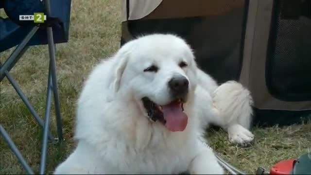 Как да започнем обучението в надпреварата за най-красиво куче?