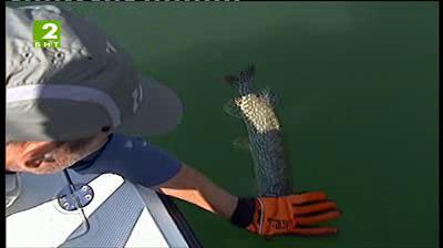 Време за губене - 21 септември 2013: Състезание по рилобов на влачене