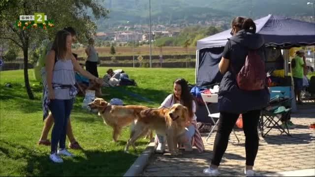 Различните роли на кучето в живота на хората