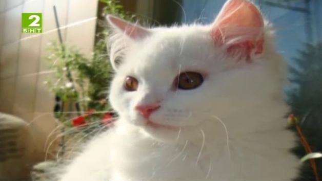 Време за губене – 14 юни 2014: Редки породи котки в Габрово и суперполицай на четири лапи