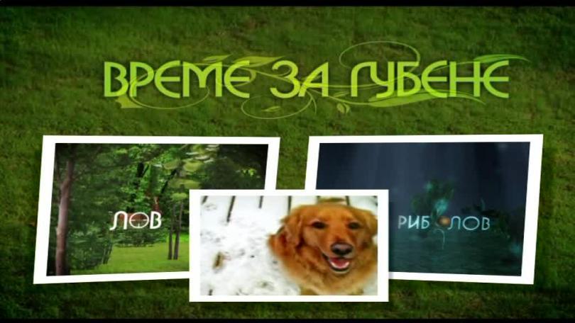 Турнир за кучета, работещи със стойка - 16.04.2016