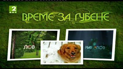 Историята на служебното куче Дизел