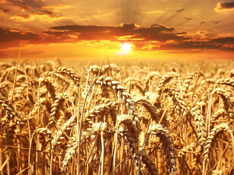 Прогнози за реколтата. Говори министър Десислава Танева