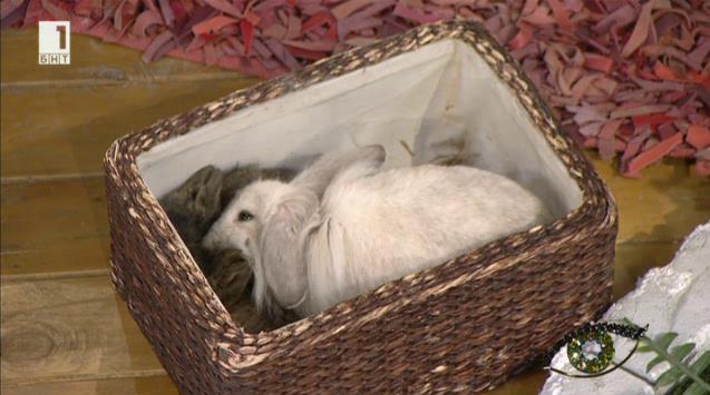 Заекът - символ на Великден