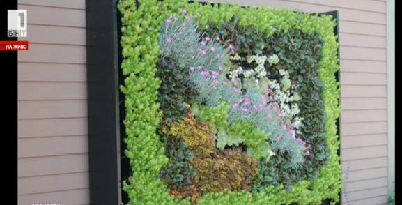 Как да си направим вертикална градина вкъщи