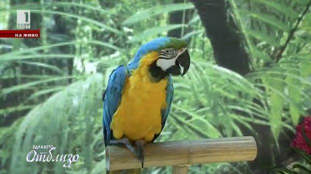 Екзотични папагали в София