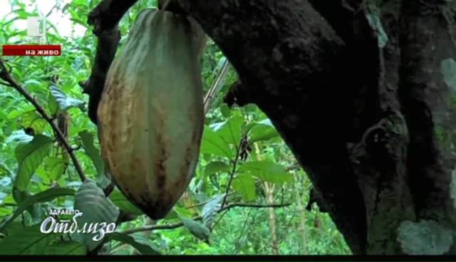 Какаото – супер храна за супер ден