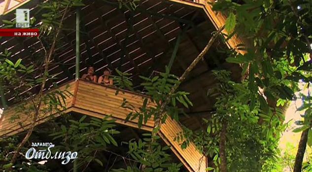 Авантюристи построиха село в клоните на тропическите дървета