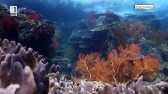 Среща с подводния свят