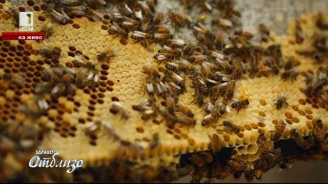 За меда, пчеларството и новаторството