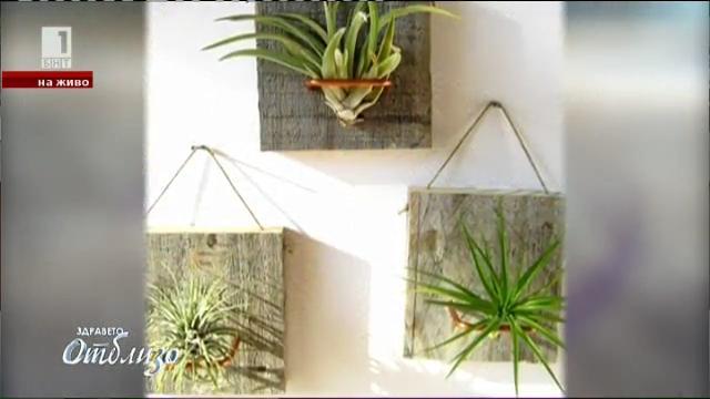 Въздушните растения – хит в декорацията за дома