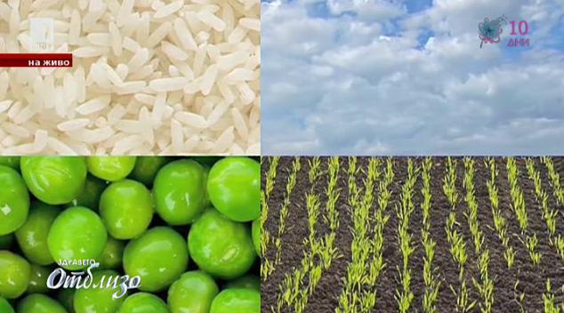 Ядем ли генно-модифицирани храни?