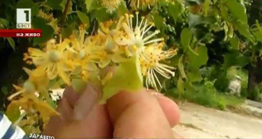 Природна аптека: Рецепта за лечение на болни стави